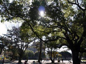 豊橋公園内の写真